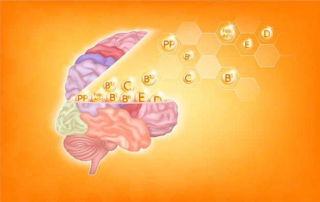 Vitamins for brain essential nutrients for brain health main human organs with molecular