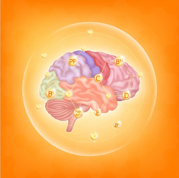 뇌를 위한 비타민 뇌 건강을 위한 필수 영양소 분자를 가진 주요 인체 장기