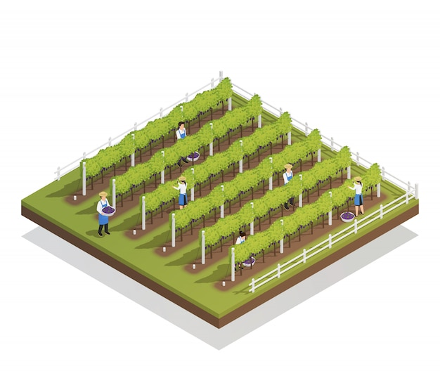 Viticulture isometric composition