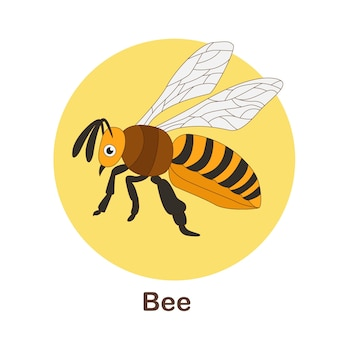 Vocabulary flash card for kids. bee with picture of bee
