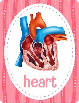 단어 심장 단어 플래시 카드