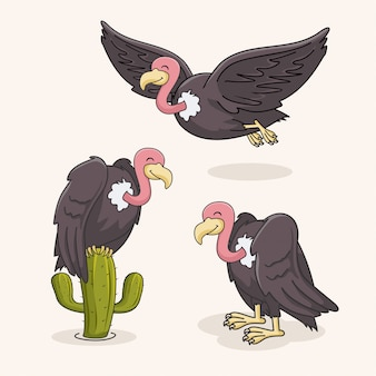 Vulture bird collection