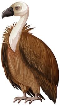 독수리는 흰색 배경에 고립