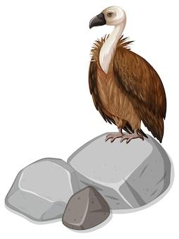 Avvoltoio in piedi sulla pietra su bianco