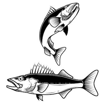 Знак рыбы судак на белом фоне. рыбалка на судака. элемент для логотипа, этикетки, эмблемы, знака. иллюстрация