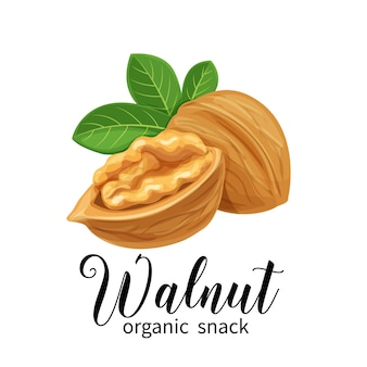 Walnut in cartoon style
