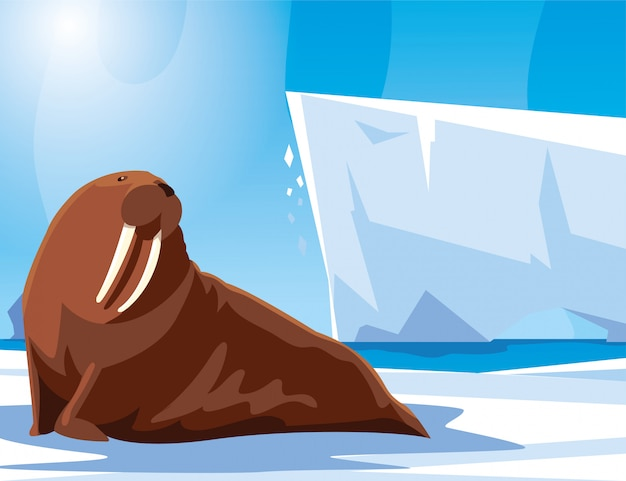 Walrus at the north pole, arctic landscape