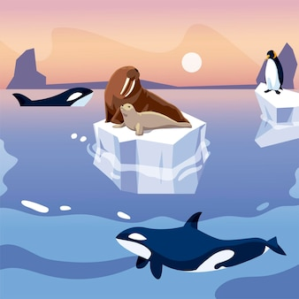 Walrus and penguin on iceberg orca whales in the sea  illustration