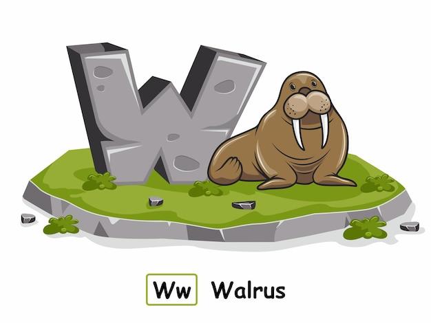 바다 코끼리 바위 돌 알파벳 동물 편지 w