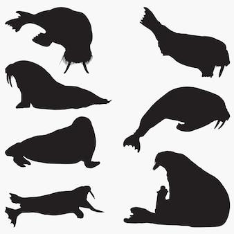 Walrus silhouettes set