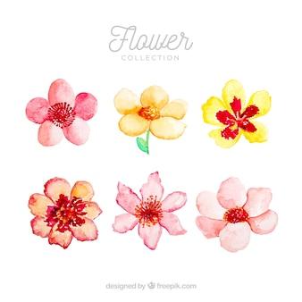 Набор ярких цветов в стиле watecolor