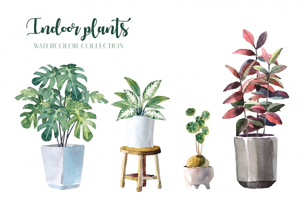 Water color indoor plants (monstera, lady palm, chinese evergreen, rubber plant and stephania erecta)