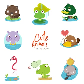 Water cute animals