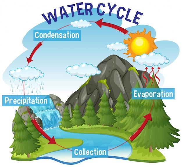 Processo del ciclo dell'acqua sulla terra
