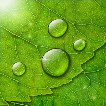 Water drops on green leaf macro background