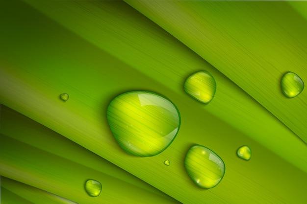 新鮮な緑の草、現実的なベクトル図に水滴。ベクトルイラスト