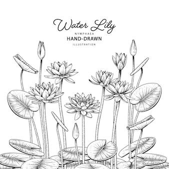 白で隔離されるスイレンの花装飾セット