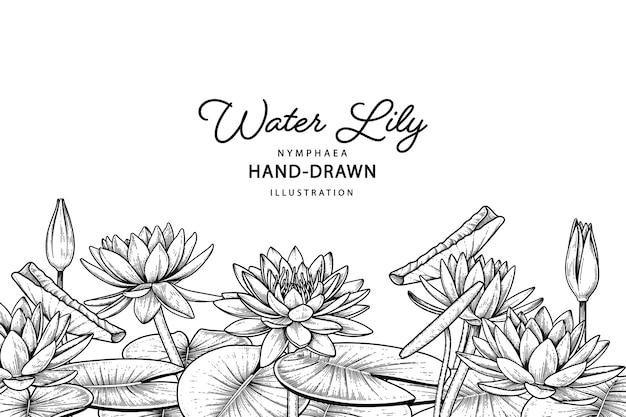 白で隔離の睡蓮の花の図面