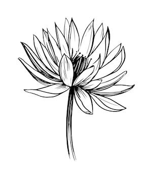 Водяная лилия. лотос. рисованный контур
