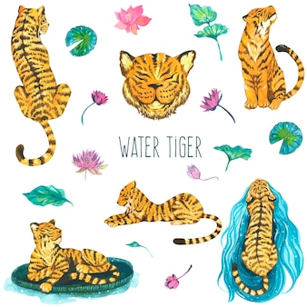 Water tiger, watercolor illustrations. vector isolated elements.