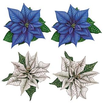 Waterclor hand drawn elegant realistic poinsettia decorations