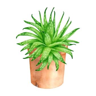 Акварельное растение алоэ вера в керамическом цветочном горшке ручной обращается суккулент