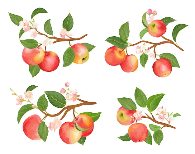Watercolor apple branches, leaves and flowers for posters, wedding cards, summer banners, cover design templates, scrapbooking, social media stories, spring wallpapers. vector illustration elements