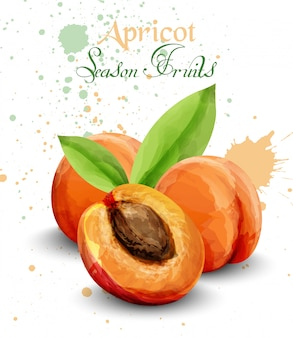 Watercolor apricot fruit