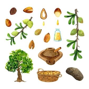 Collezione di elementi di olio di argan dell'acquerello