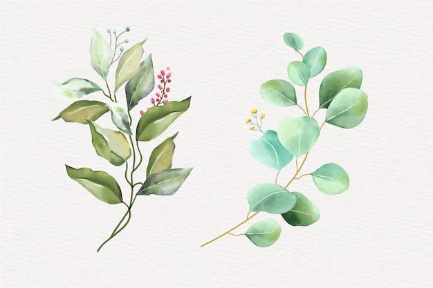 緑の葉のハーブの花束と水彩画の配置