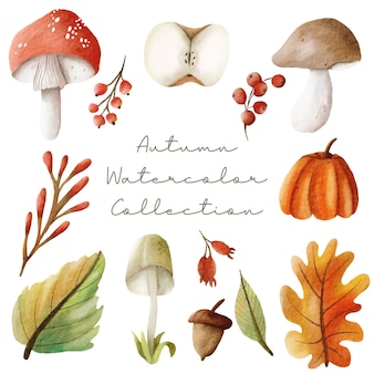 Watercolor autumn elements set