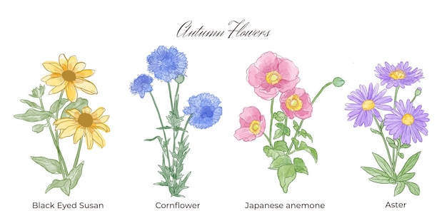 Watercolor autumn flowers collection