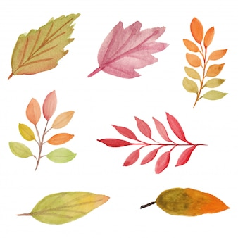 Watercolor autumn leaf illustration pack