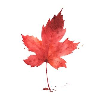 수채화 가을 잎입니다. 메이플 리프 수채화 손으로 그린 흰색 배경에 고립. 가을 축제, 인사말 카드, 초대장, 포스터 장식 디자인에 대한 그림.