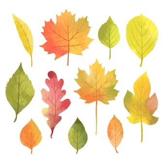 Коллекция акварелей осенних листьев