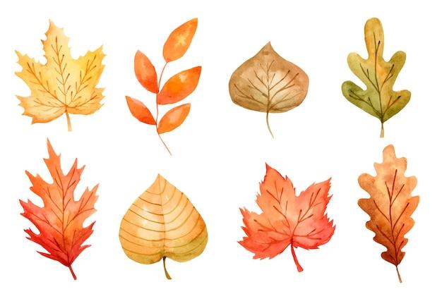 Коллекция акварельных осенних листьев