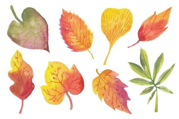 Collezione di foglie autunnali ad acquerello