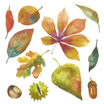 Watercolor autumn leaves pack