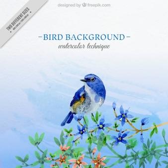 예쁜 파랑 새의 수채화 배경