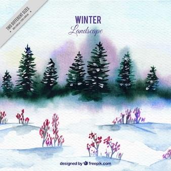 Акварель фоне снежный пейзаж с соснами
