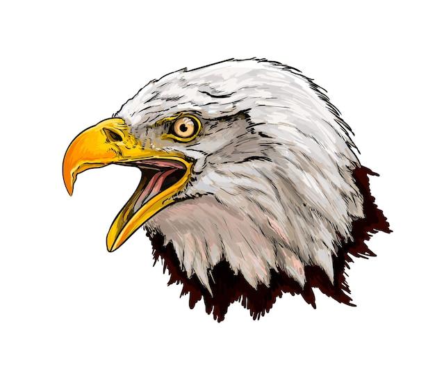 Watercolor bald eagle head portrait on white