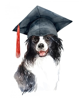 Watercolor bearded collie dog with mortar board