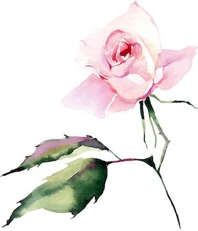 Watercolor beautiful bright elegant pink spring herbal rose