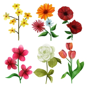 Watercolor beautiful spring flower collection
