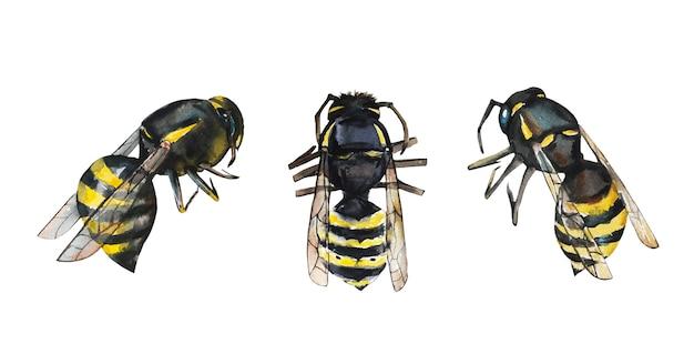 水彩の蜂やハチ