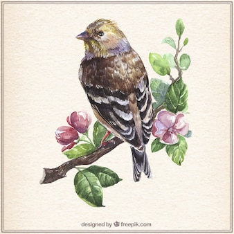 Acquerello uccello sul ramo