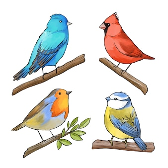 Watercolor bird collection concept