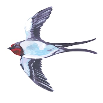 Watercolor bird flying swallow