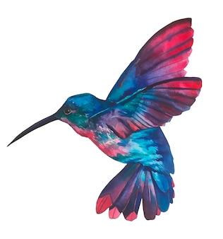 水彩鳥キウイ。