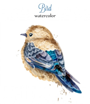 Watercolor bird painted style illustration